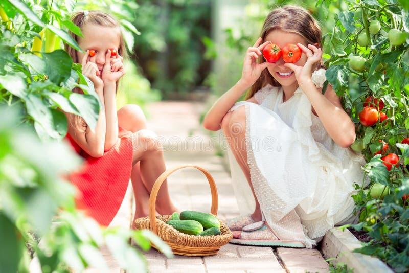 Retrato das crianças com os tomates grandes nas mãos na estufa foto de stock