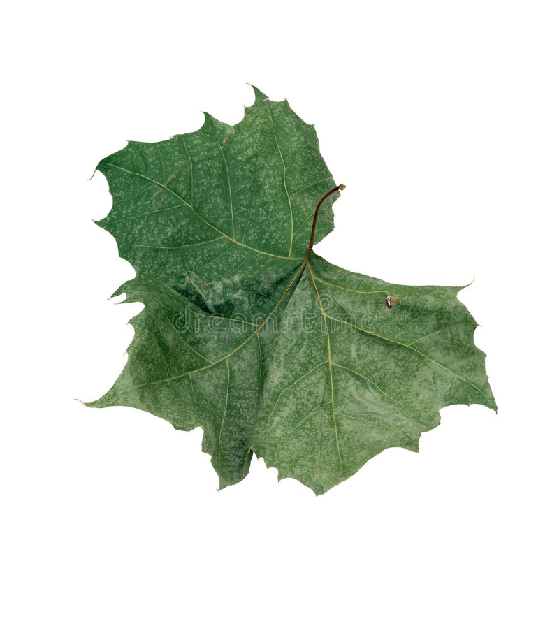 Retrato das plantas imagens de stock royalty free
