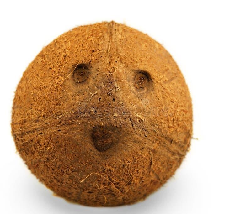 retrato de cocos fotografía de archivo libre de regalías