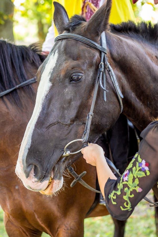 Retrato de dois cavalos no close-up do perfil imagem de stock royalty free
