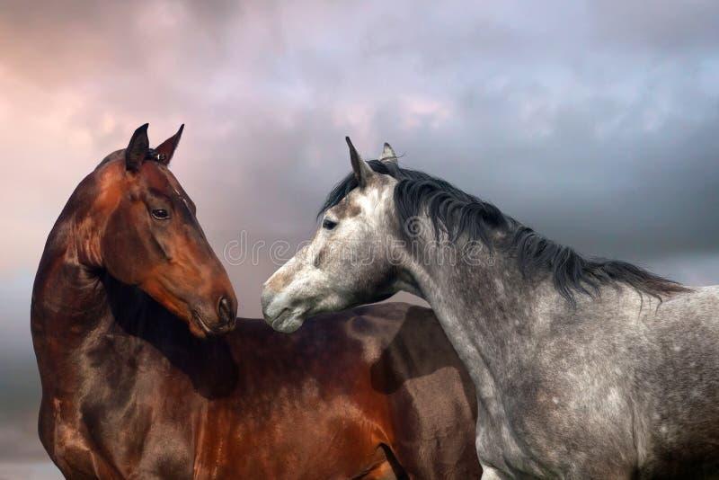 Retrato de dos caballos fotografía de archivo