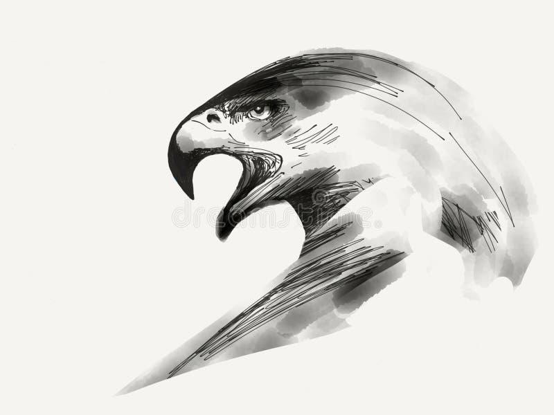 Retrato de Eagle preto e branco fotografia de stock royalty free