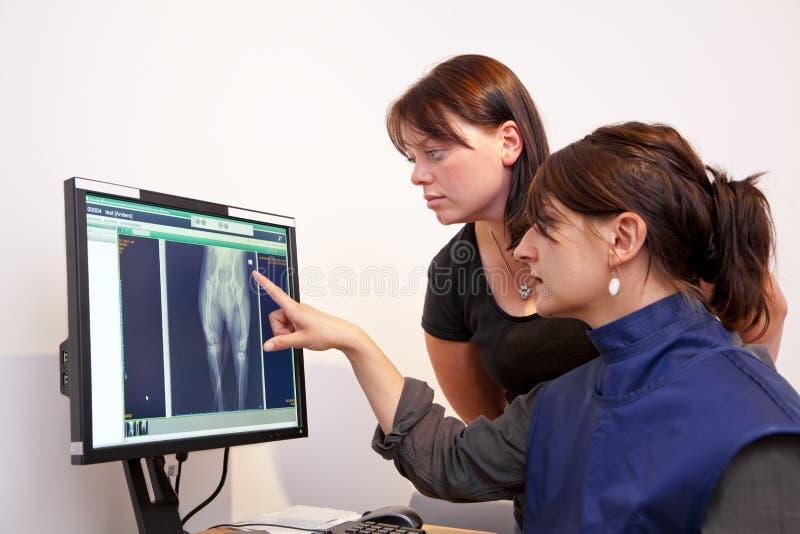 Retrato de explicação veterinário do raio X foto de stock