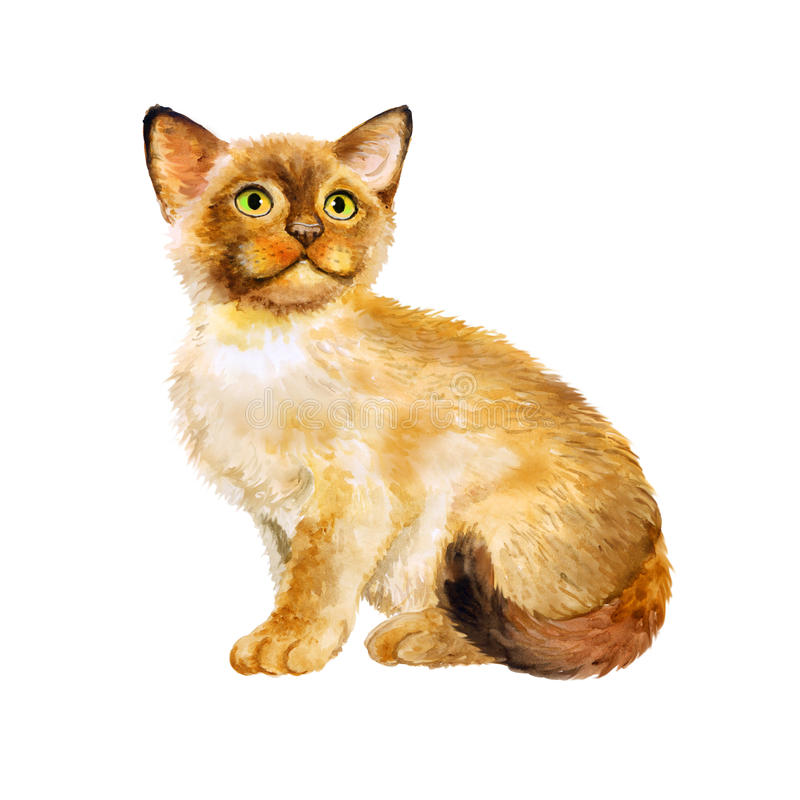 Retrato de la acuarela del gatito sagrado del birman, gato sagrado de Birmania en el fondo blanco Animal doméstico casero dulce d stock de ilustración
