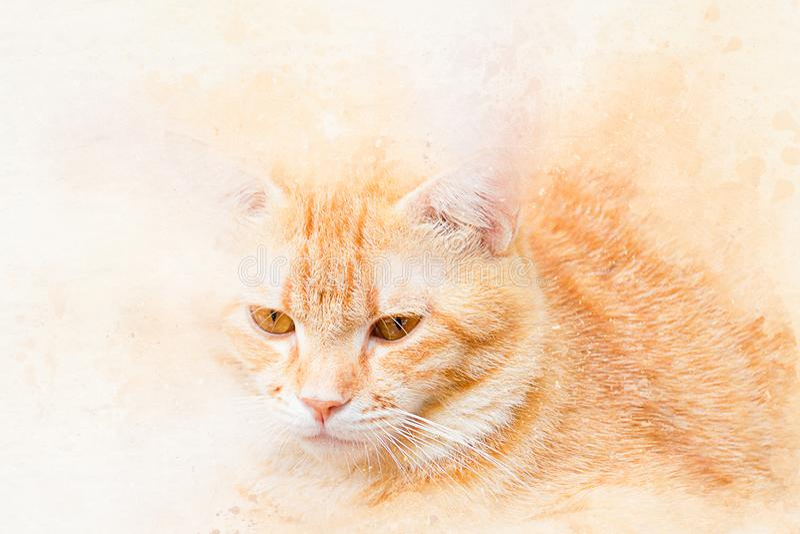 Retrato de la acuarela del gato anaranjado color de la pintura del arte en la lona para el fondo fotografía de archivo