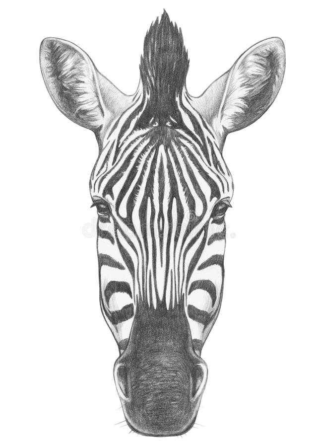 Retrato de la cebra libre illustration
