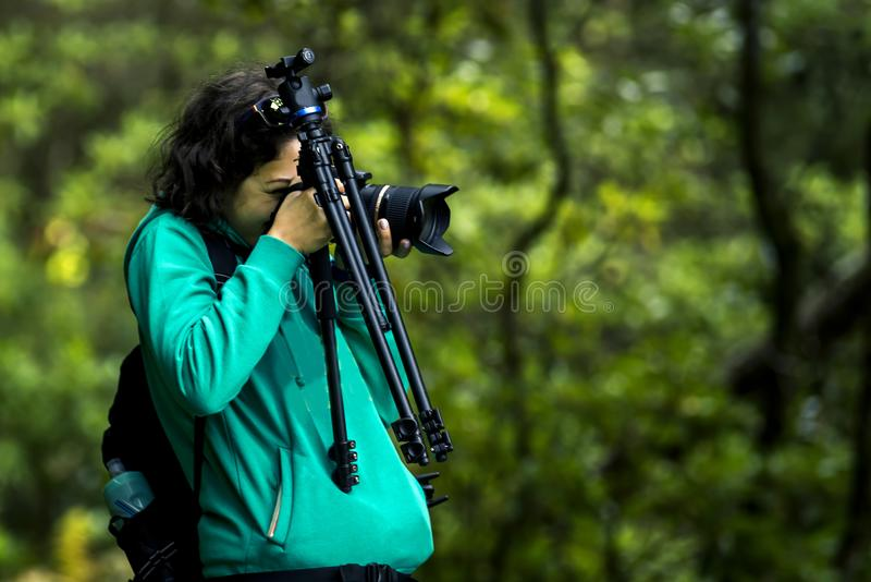 Retrato de la chica joven en camiseta verde que camina por levada en la isla de Madeira foto de archivo libre de regalías