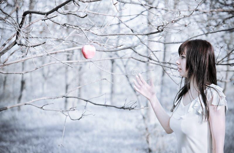 Retrato de la chica joven hermosa que escoge la manzana imagen de archivo libre de regalías