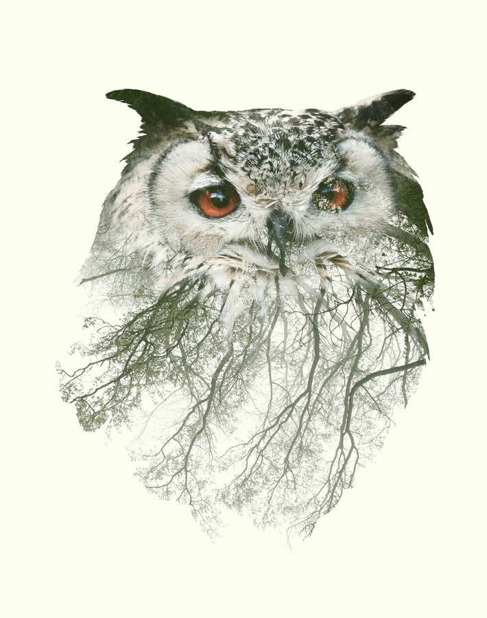 Retrato de la exposición doble de la rama del búho y de árbol imagen de archivo