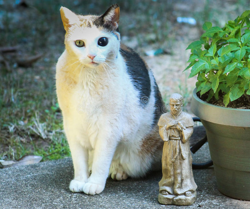 retrato de la familia del Gato-jardín fotos de archivo
