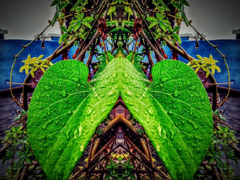 Retrato de la hoja con efecto del espejo fotos de archivo libres de regalías