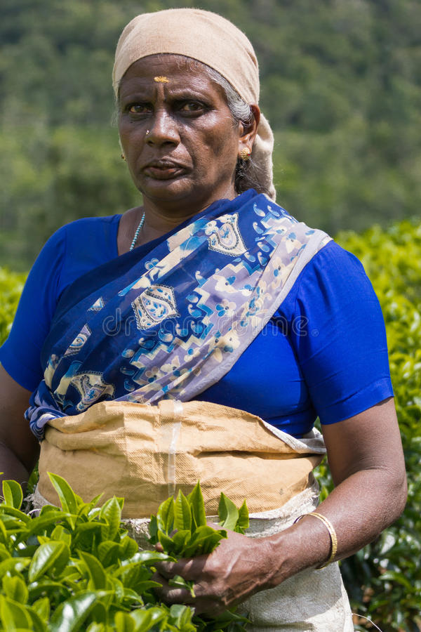 Retrato de la mujer en hojas de té azules de la cosecha imagen de archivo