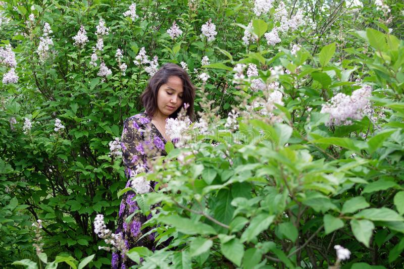 Retrato de la mujer joven hermosa en vestido negro-púrpura en un jardín con los arbustos de lila florecientes imagenes de archivo