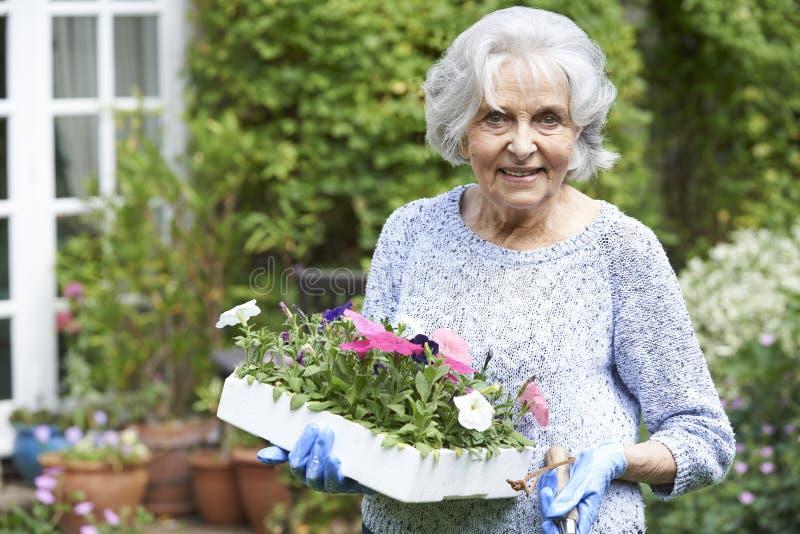 Retrato de la mujer mayor que planta las flores en jardín imagen de archivo