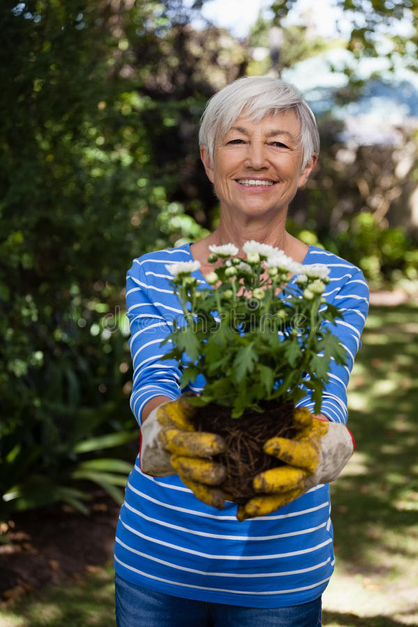 Retrato de la mujer mayor sonriente que se coloca con las flores blancas fotos de archivo