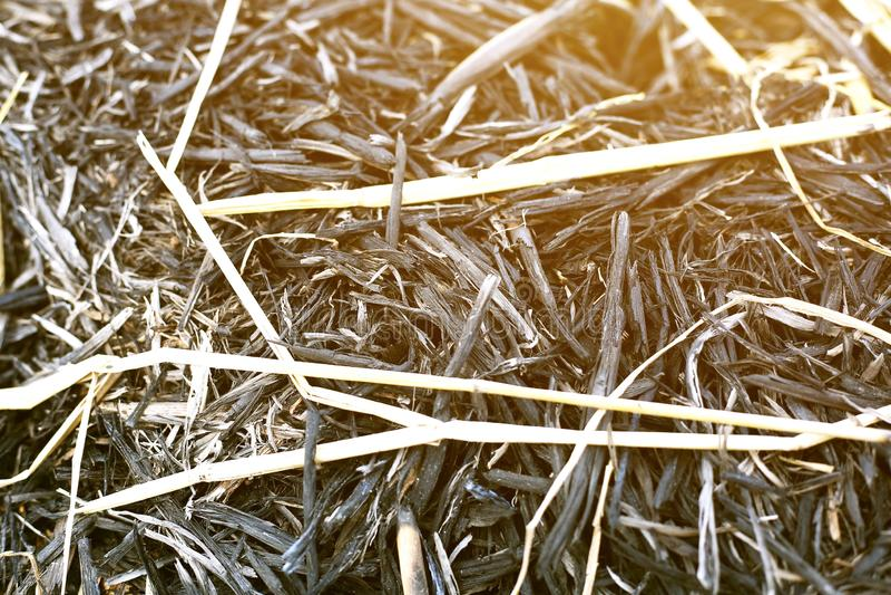 Retrato de la pila de la hierba seca foto de archivo