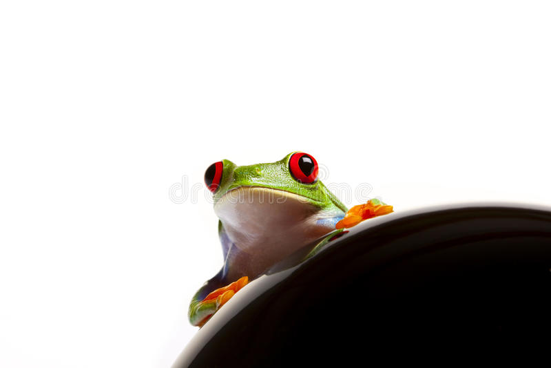 Retrato de la rana foto de archivo