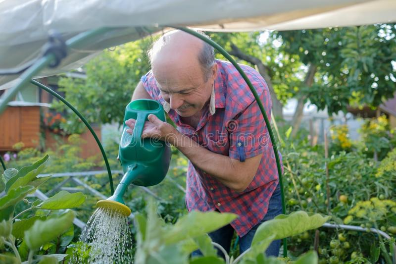 Retrato de las plantas de riego del hombre mayor en el jardín rural foto de archivo libre de regalías