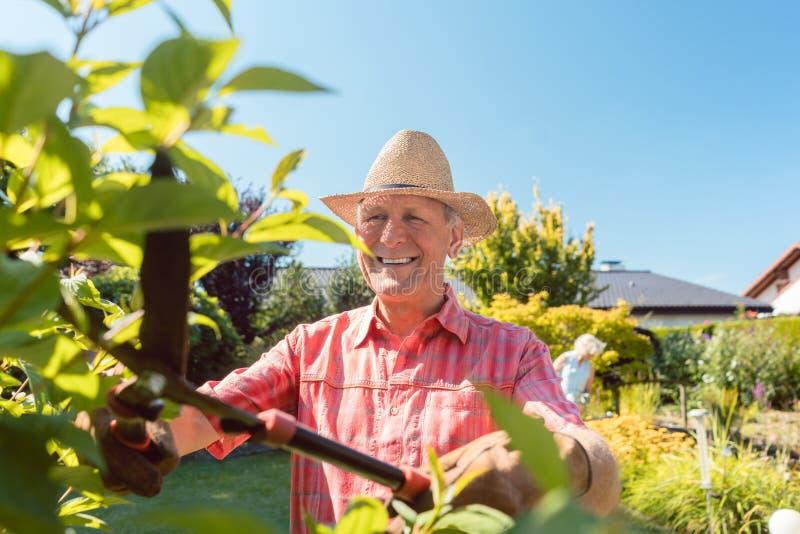 Retrato de los arbustos activos alegres de un ajuste del hombre mayor en el jardín imagen de archivo