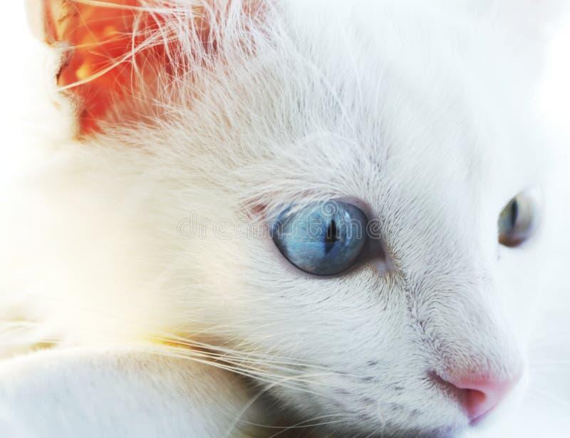 Retrato de los gatos fotos de archivo