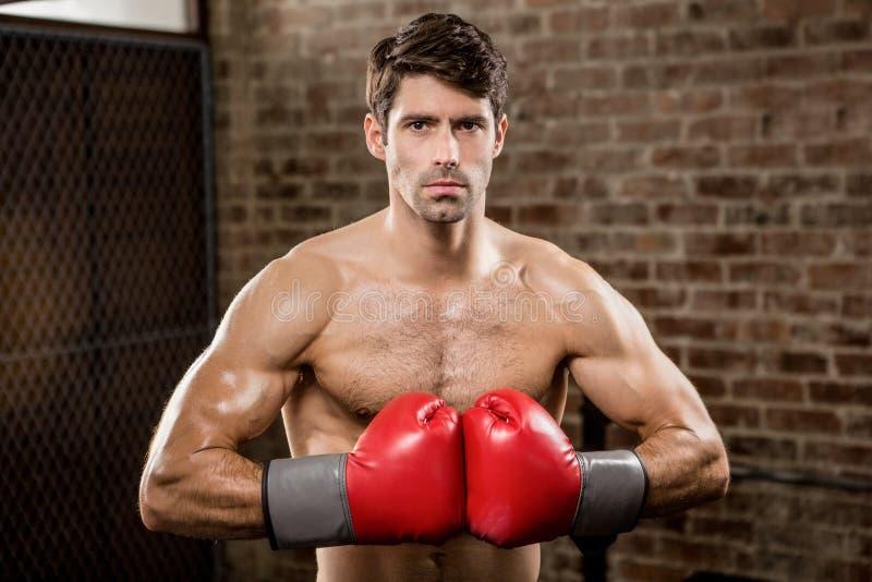 Retrato de los guantes de boxeo del hombre que llevan serio foto de archivo libre de regalías