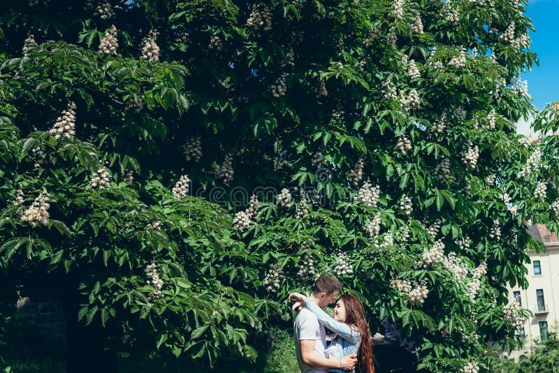 Retrato de los pares sonrientes bonitos en el amor que abraza blando cerca del árbol floreciente verde en Budapest, Hungría fotos de archivo