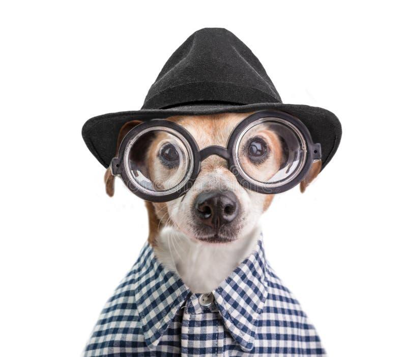 Retrato de moda elegante de moda divertido del perro en vidrios redondos, sombrero negro y camisa a cuadros Fondo blanco fotografía de archivo