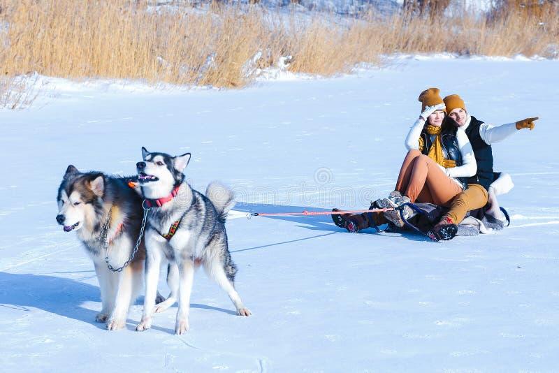 Retrato de pares jovenes con los perros que sonríen y que abrazan en invierno imagen de archivo