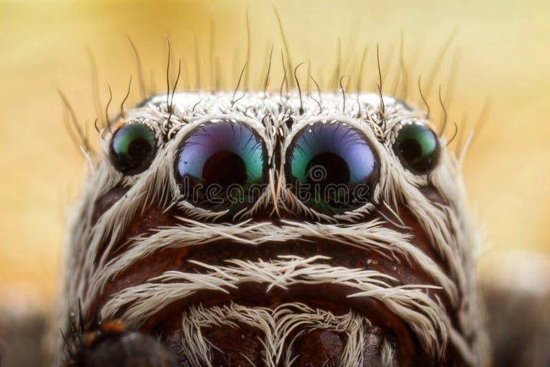 Retrato de salto de la araña imágenes de archivo libres de regalías