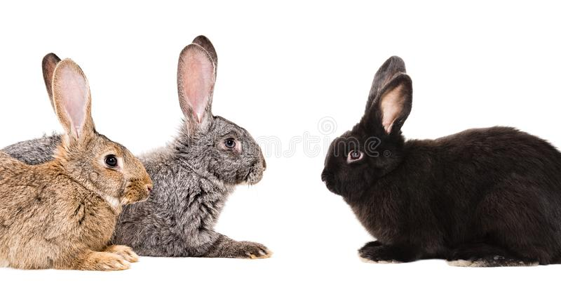 Retrato de três coelhos imagens de stock