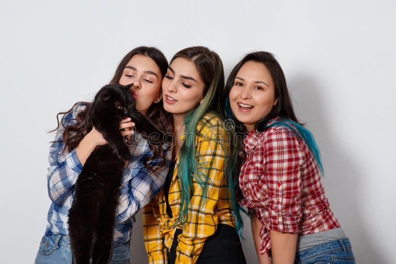 Retrato de três meninas bonitas novas com um gato em seus braços no fundo claro branco foto de stock royalty free
