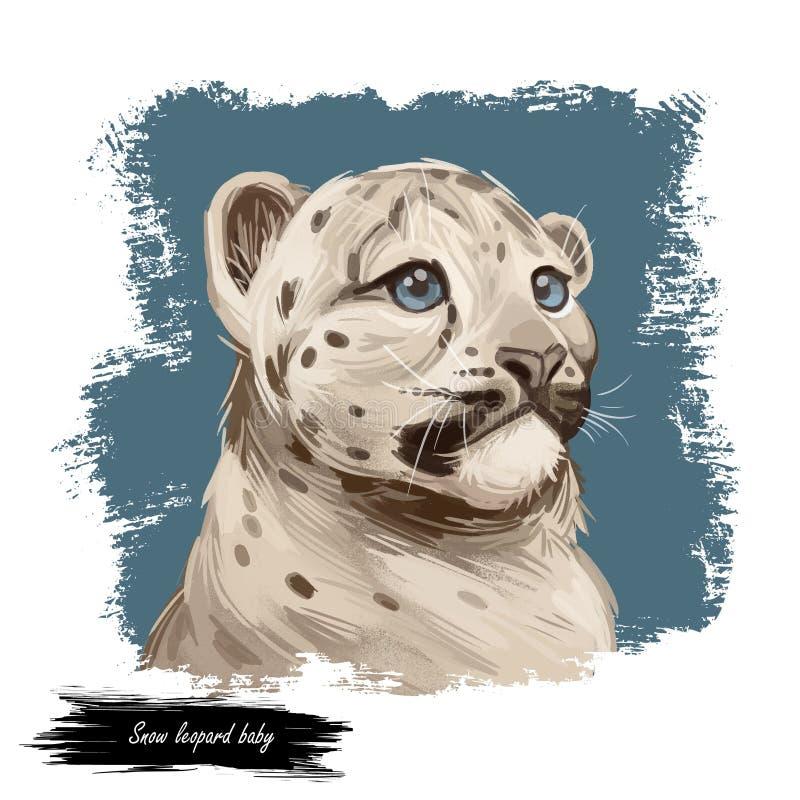 Retrato de um bebê-leopardo-da-neve em close-up Ilustração da arte digital em aquarela da Convenção Panthera Mamíferos com pelúci ilustração royalty free