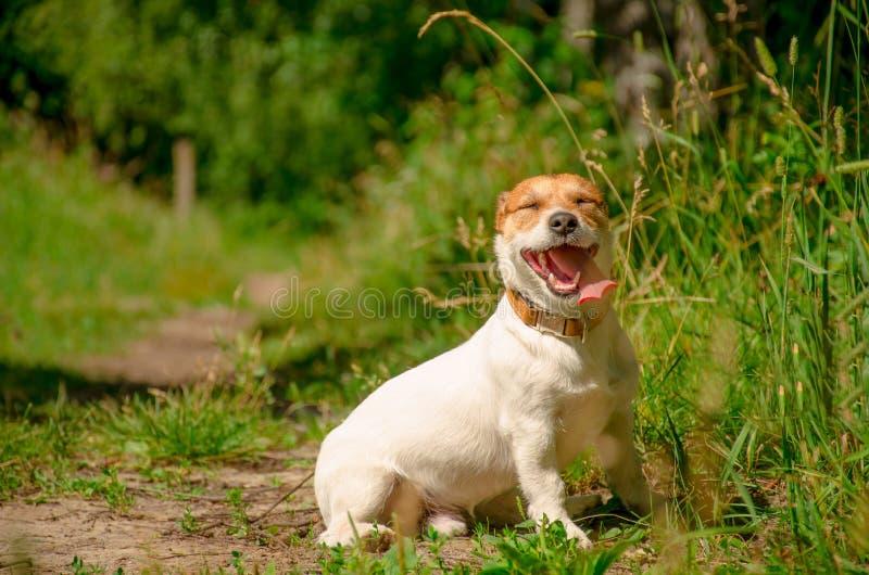 Retrato de um cão branco em um dia de verão ensolarado foto de stock royalty free