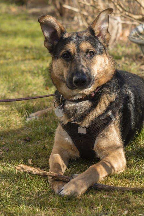 Retrato de um cão novo no jardim fotografia de stock royalty free