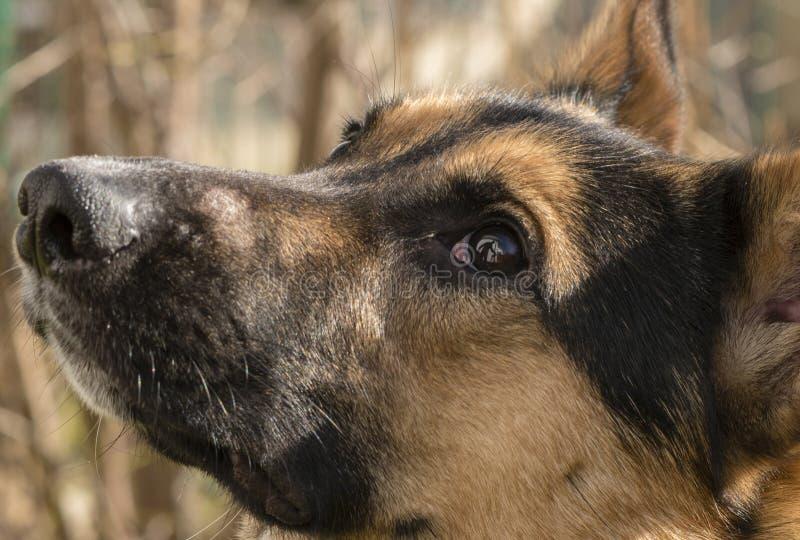 Retrato de um cão novo no jardim fotos de stock royalty free