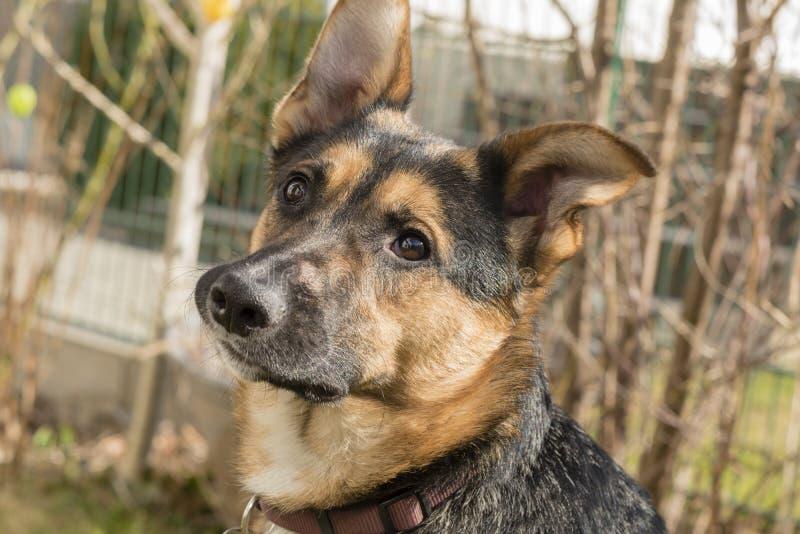 Retrato de um cão novo no jardim fotografia de stock