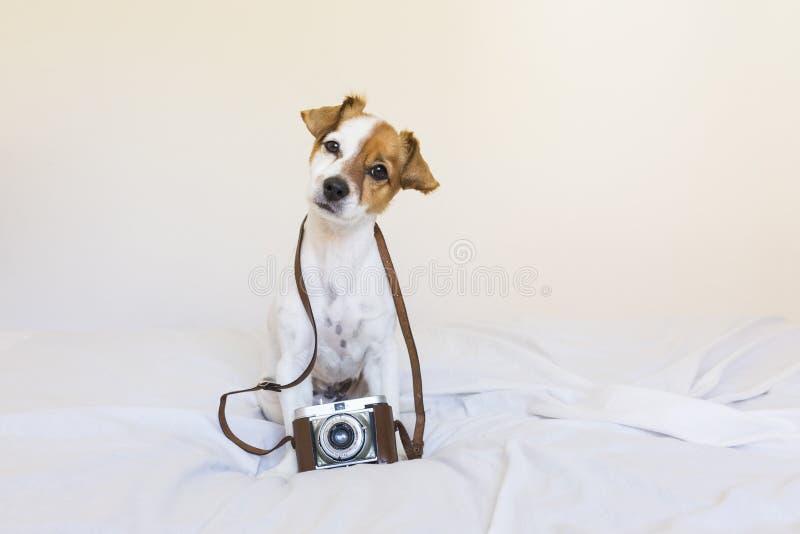 Retrato de um cão pequeno novo bonito sobre com uma câmera do vintage S imagem de stock