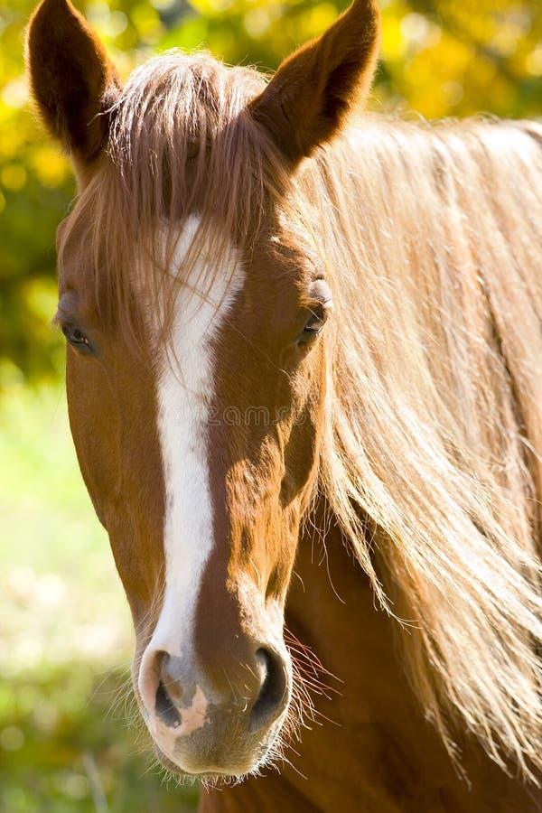 Retrato de um cavalo no amarelo fotografia de stock royalty free