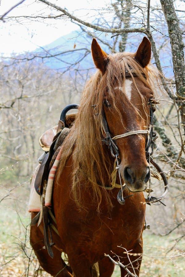 Retrato de um cavalo vermelho na floresta fotos de stock royalty free