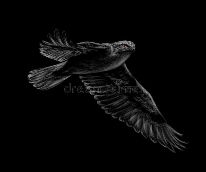 Retrato de um falcão do voo em um fundo preto ilustração do vetor