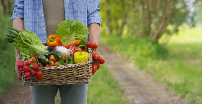 Retrato de um fazendeiro novo feliz que guarda legumes frescos em uma cesta Em um fundo da natureza o conceito do PR biológico, b fotos de stock