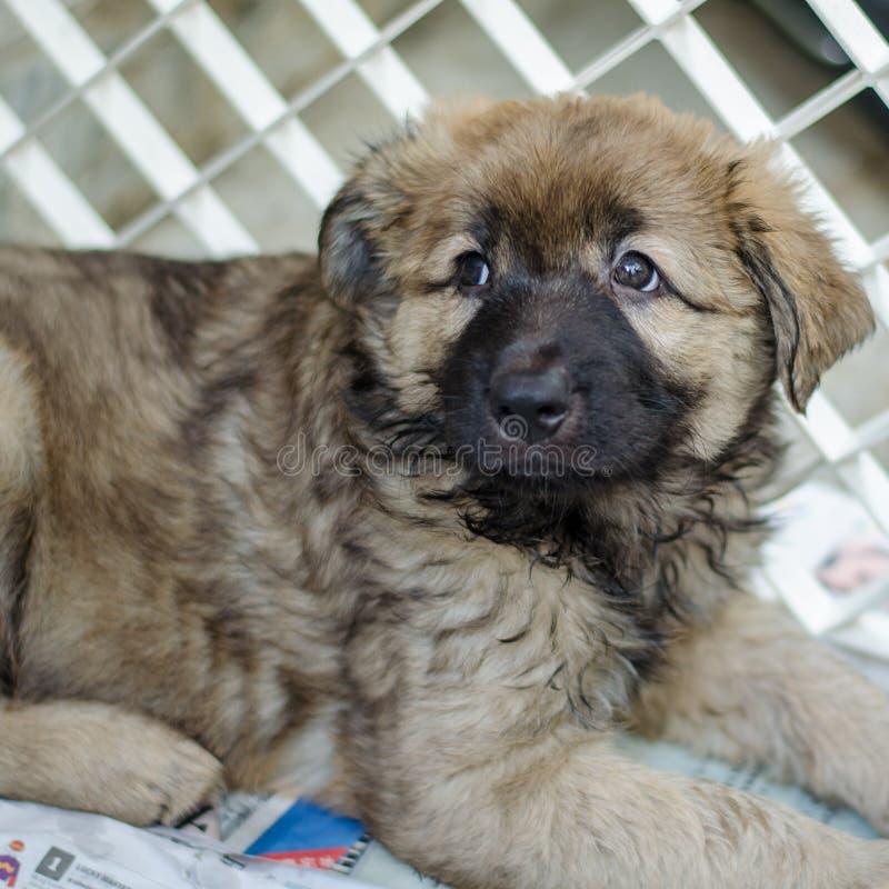 Retrato de um filhote de cachorro imagem de stock royalty free
