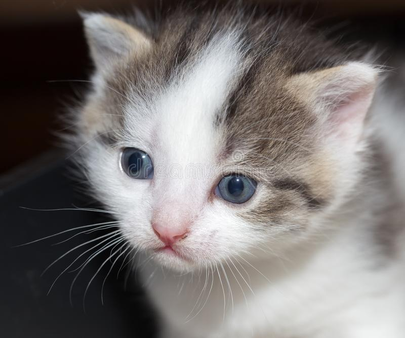 Retrato de um gatinho pequeno foto de stock royalty free