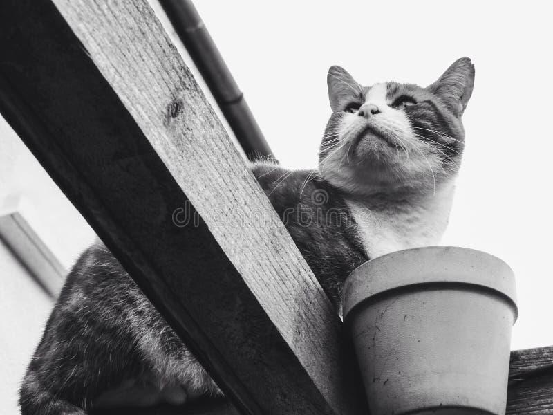Retrato de um gato fotografia de stock royalty free