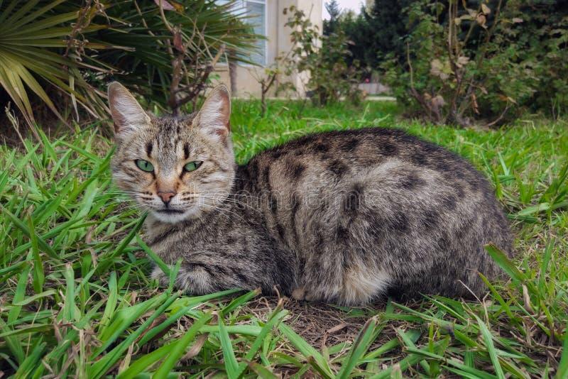 Retrato de um gato bonito imagem de stock