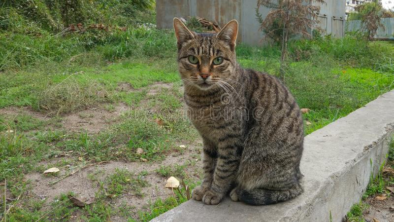 Retrato de um gato bonito fotografia de stock