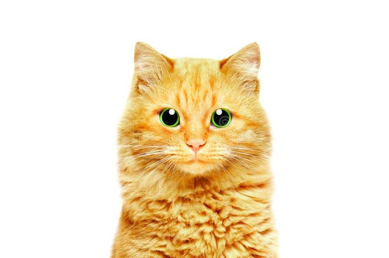 Retrato de um gato bonito do gengibre com olhos verdes fotos de stock royalty free