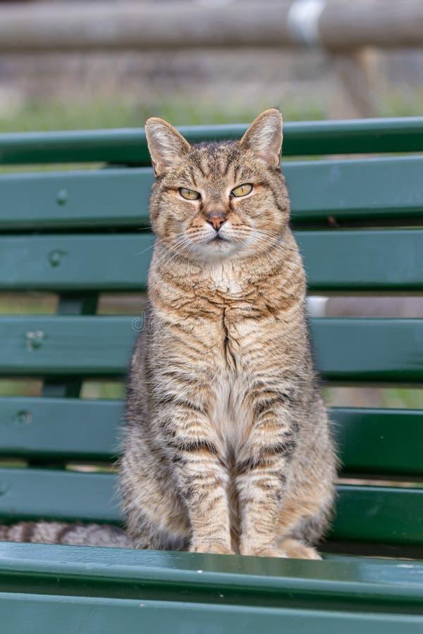 Retrato de um gato bonito que senta-se em um banco imagens de stock royalty free