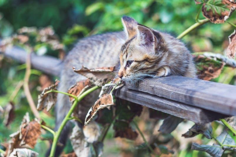 Retrato de um gato cinzento bonito do país fotos de stock