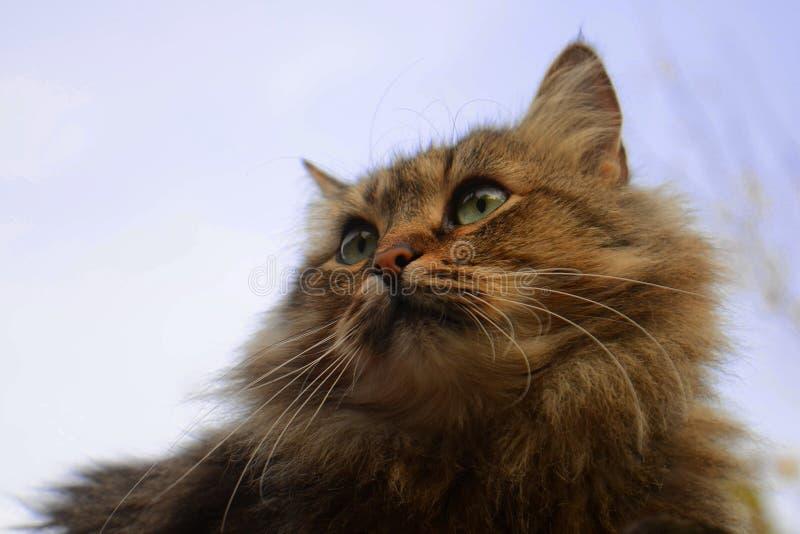 Retrato de um gato contra o céu fotos de stock royalty free
